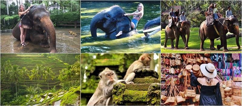 Bali Bathing Elephant + Ubud Center Tour